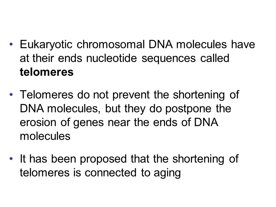 Eukaryotic chromosomal DNA molecules have at their ends nucleotide sequences called telomeres