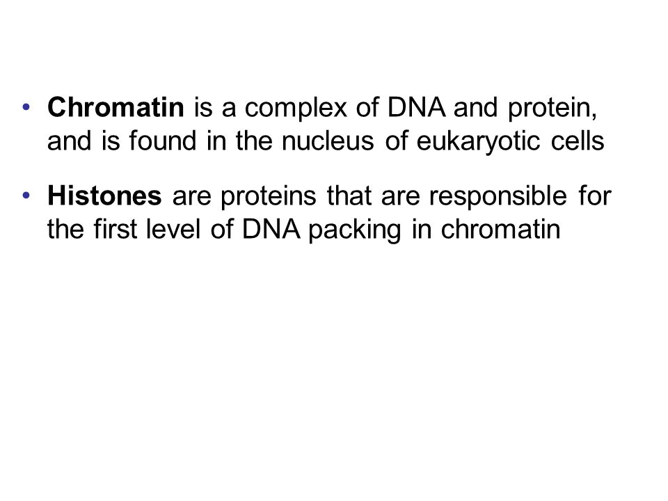 Chromatin is a complex of DNA and protein, and is found in the nucleus of eukaryotic cells