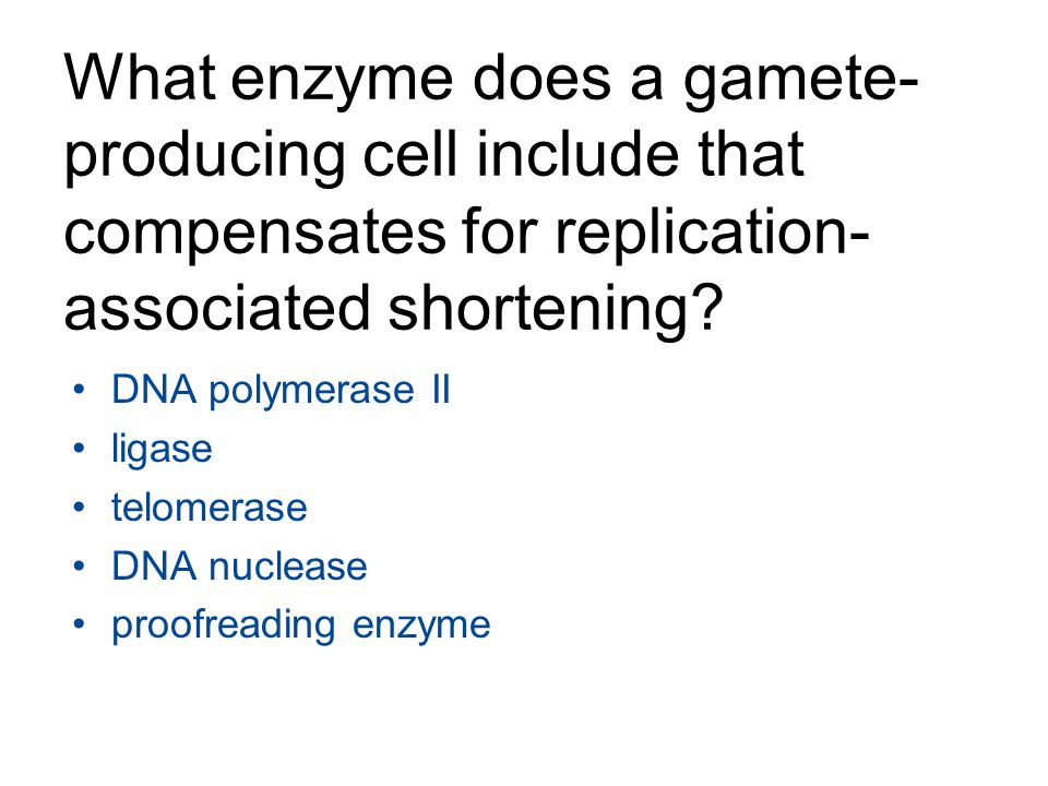 What enzyme does a gamete-producing cell include that compensates for replication-associated shortening