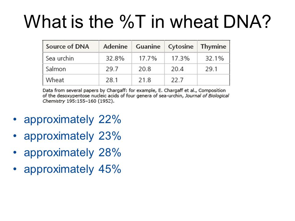 What is the %T in wheat DNA