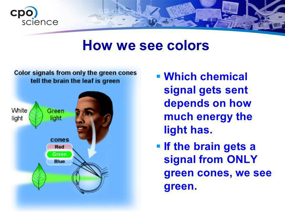 How we see colors Which chemical signal gets sent depends on how much energy the light has.
