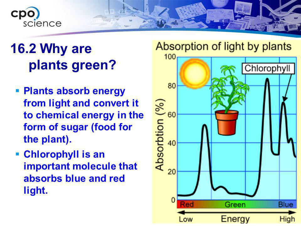 16.2 Why are plants green Plants absorb energy from light and convert it to chemical energy in the form of sugar (food for the plant).