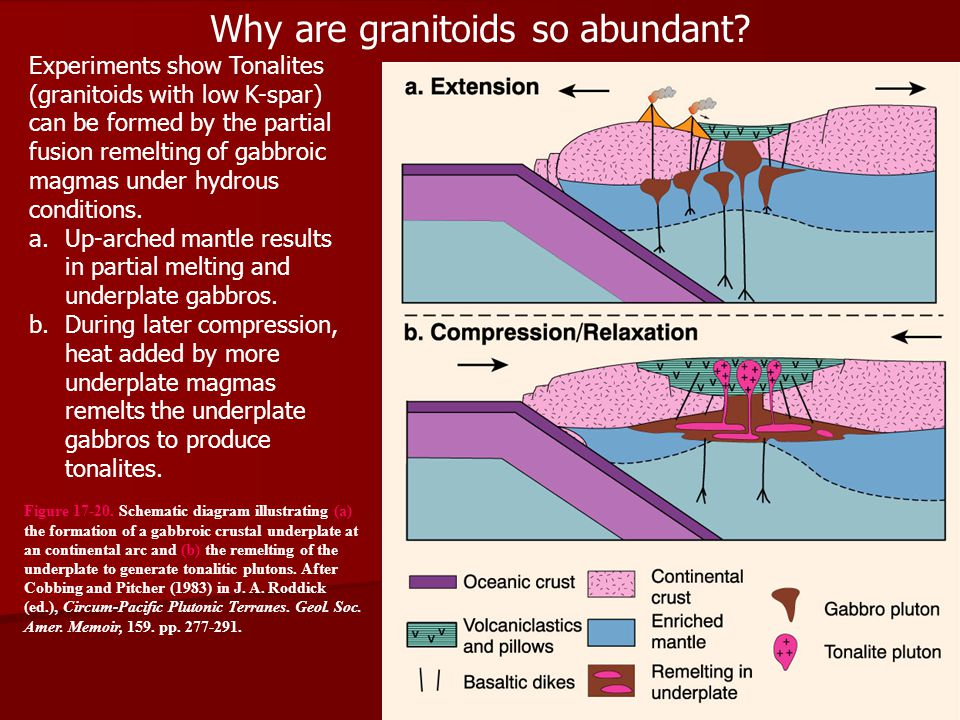 Why are granitoids so abundant