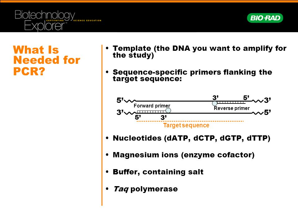 What Is Needed for PCR • Template (the DNA you want to amplify for the study) • Sequence-specific primers flanking the target sequence: