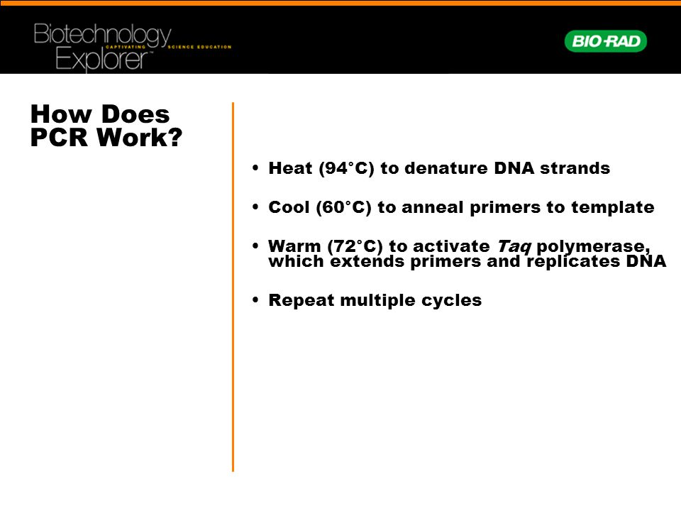 How Does PCR Work • Heat (94°C) to denature DNA strands