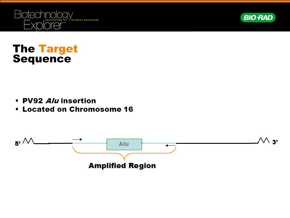 The Target Sequence • PV92 Alu insertion • Located on Chromosome 16