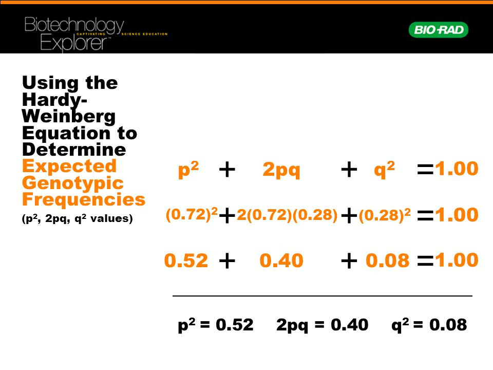 Using the Hardy-Weinberg Equation to Determine Expected Genotypic Frequencies (p2, 2pq, q2 values)