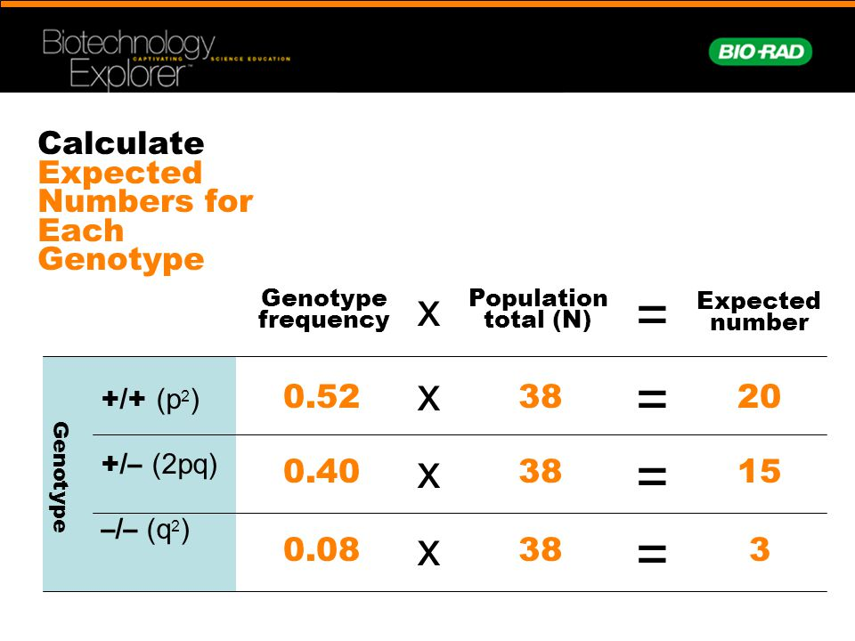 Calculate Expected Numbers for Each Genotype