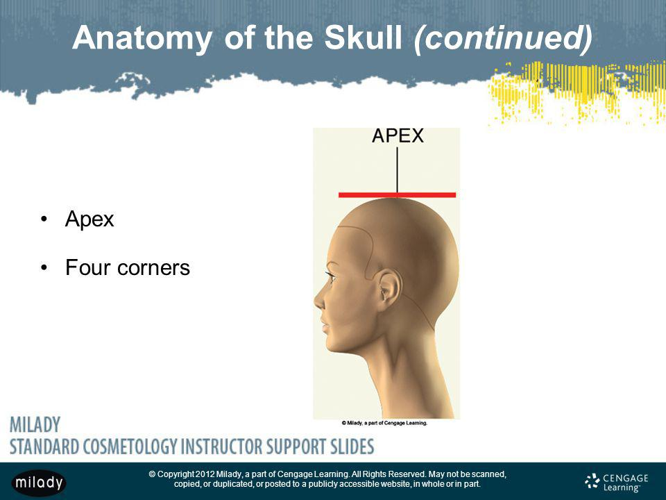Anatomy of the Skull (continued)
