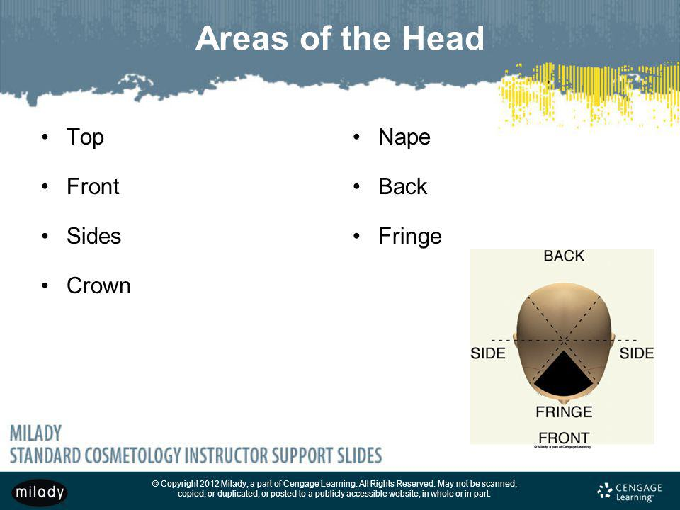 Areas of the Head Top Front Sides Crown Nape Back Fringe