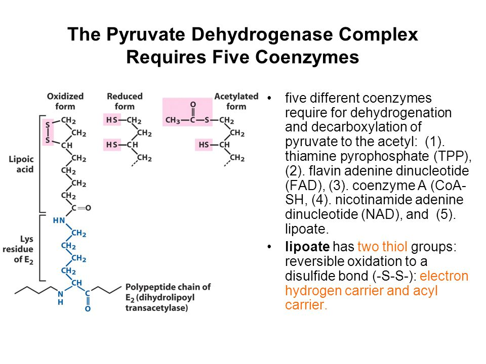 The Pyruvate Dehydrogenase Complex Requires Five Coenzymes