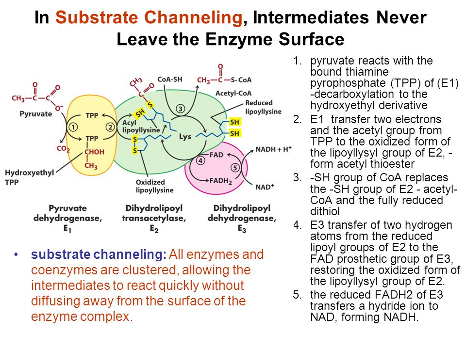 In Substrate Channeling, Intermediates Never Leave the Enzyme Surface