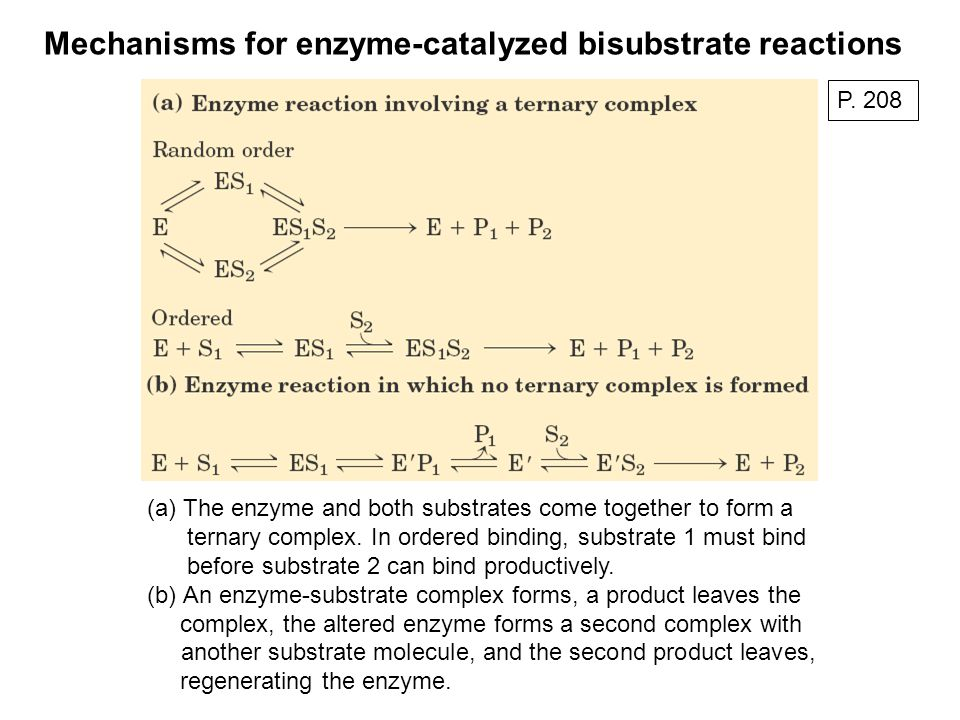 Mechanisms for enzyme-catalyzed bisubstrate reactions