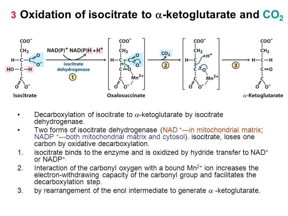 Oxidation of isocitrate to a-ketoglutarate and CO2