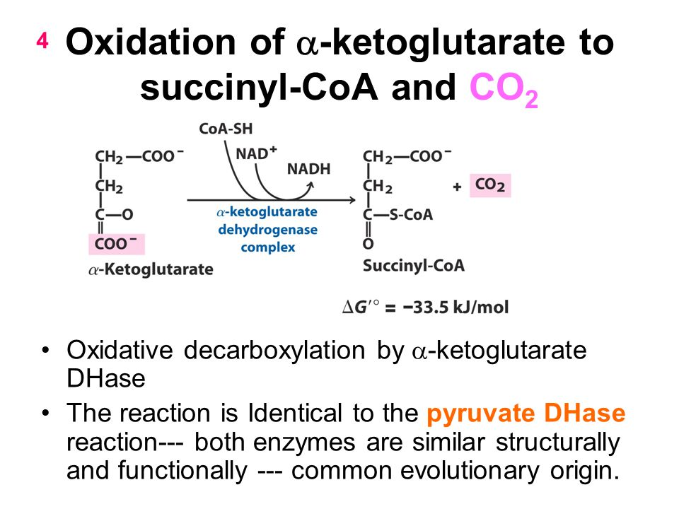 Oxidation of a-ketoglutarate to succinyl-CoA and CO2