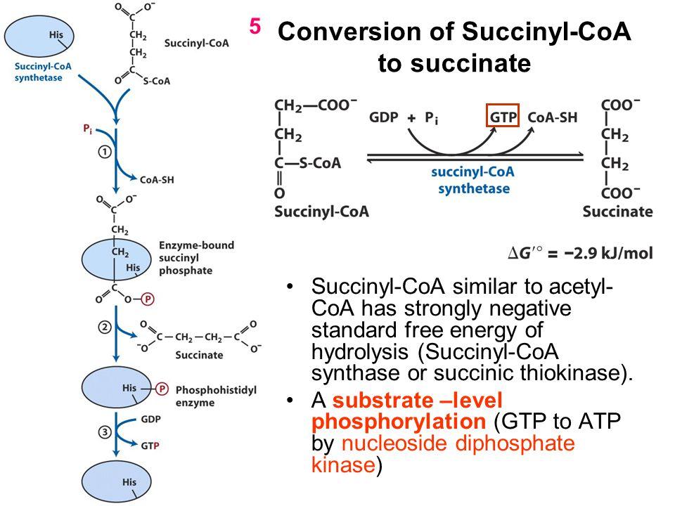 Conversion of Succinyl-CoA to succinate