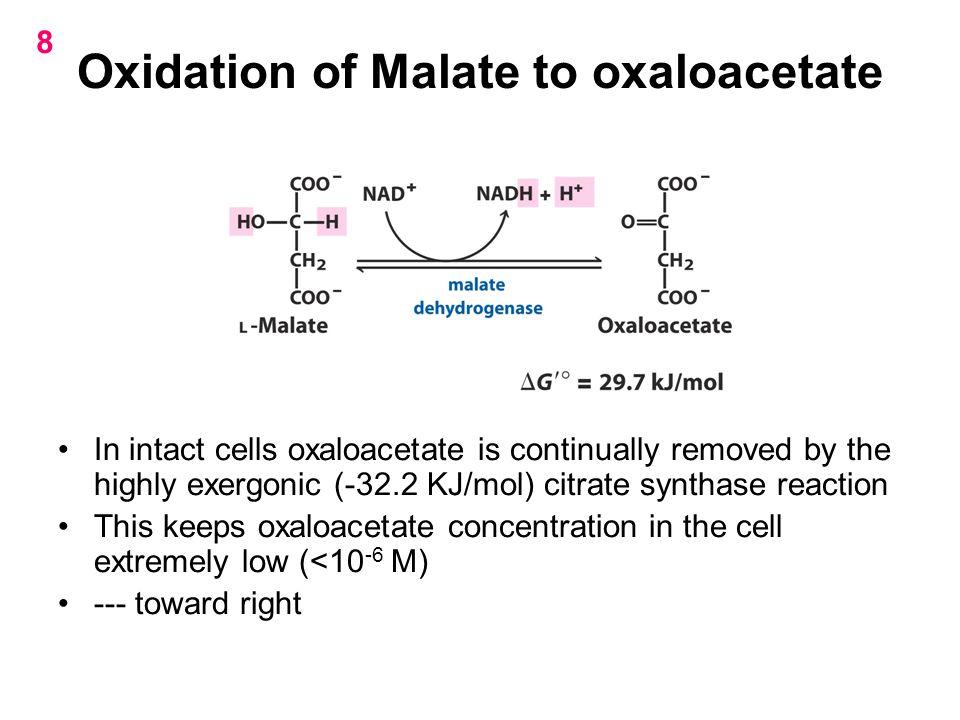 Oxidation of Malate to oxaloacetate