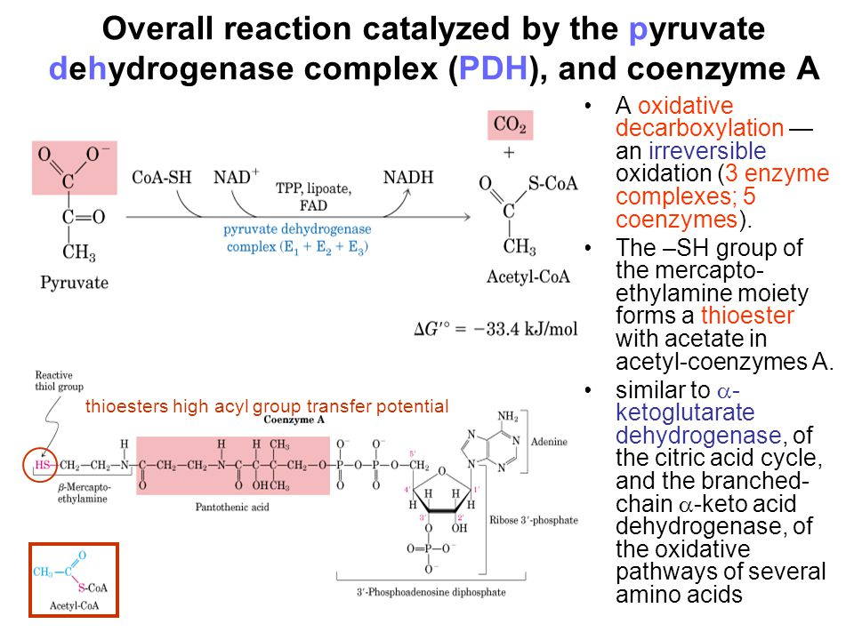 Overall reaction catalyzed by the pyruvate dehydrogenase complex (PDH), and coenzyme A