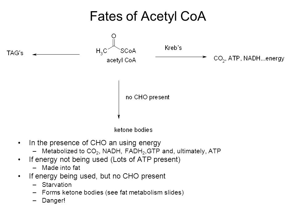Fates of Acetyl CoA In the presence of CHO an using energy