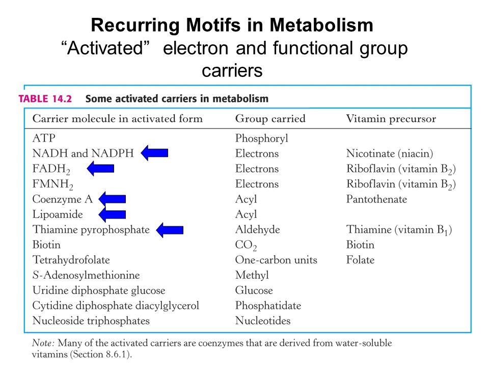 Recurring Motifs in Metabolism Activated electron and functional group carriers