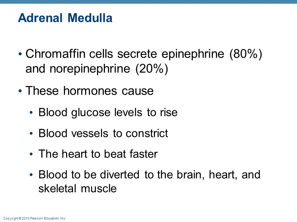 Chromaffin cells secrete epinephrine (80%) and norepinephrine (20%)