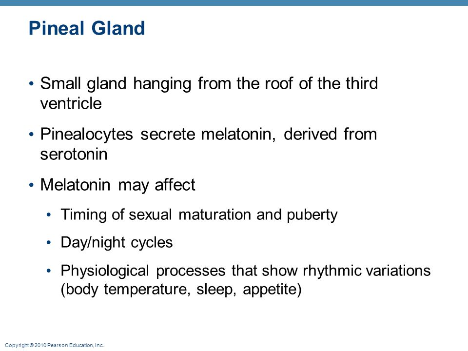 Pineal Gland Small gland hanging from the roof of the third ventricle