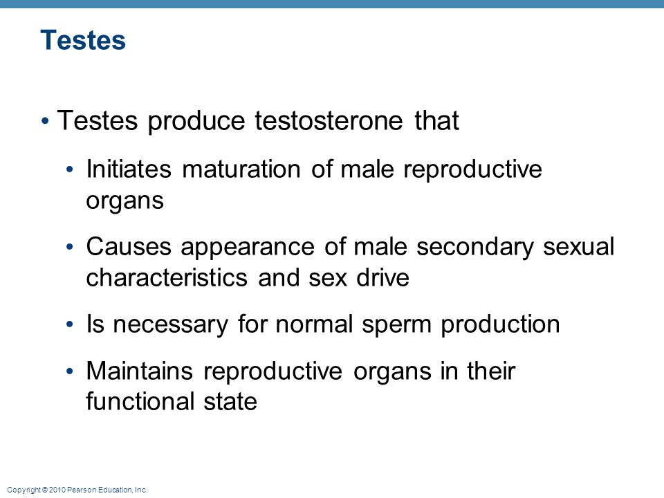 Testes produce testosterone that