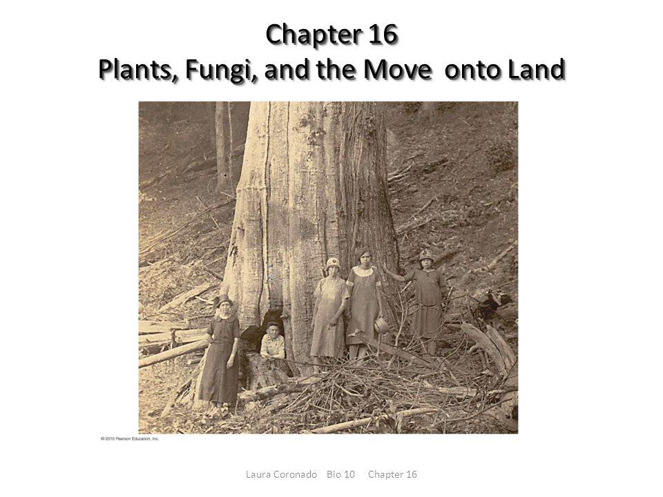 Chapter 16 Plants, Fungi, and the Move onto Land