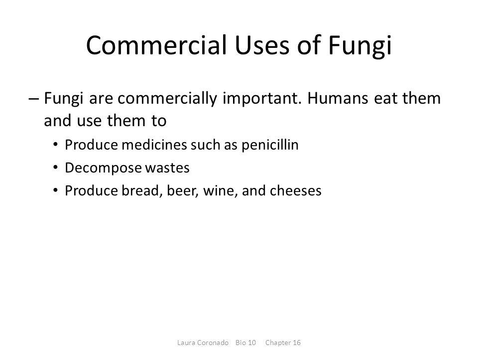 Commercial Uses of Fungi