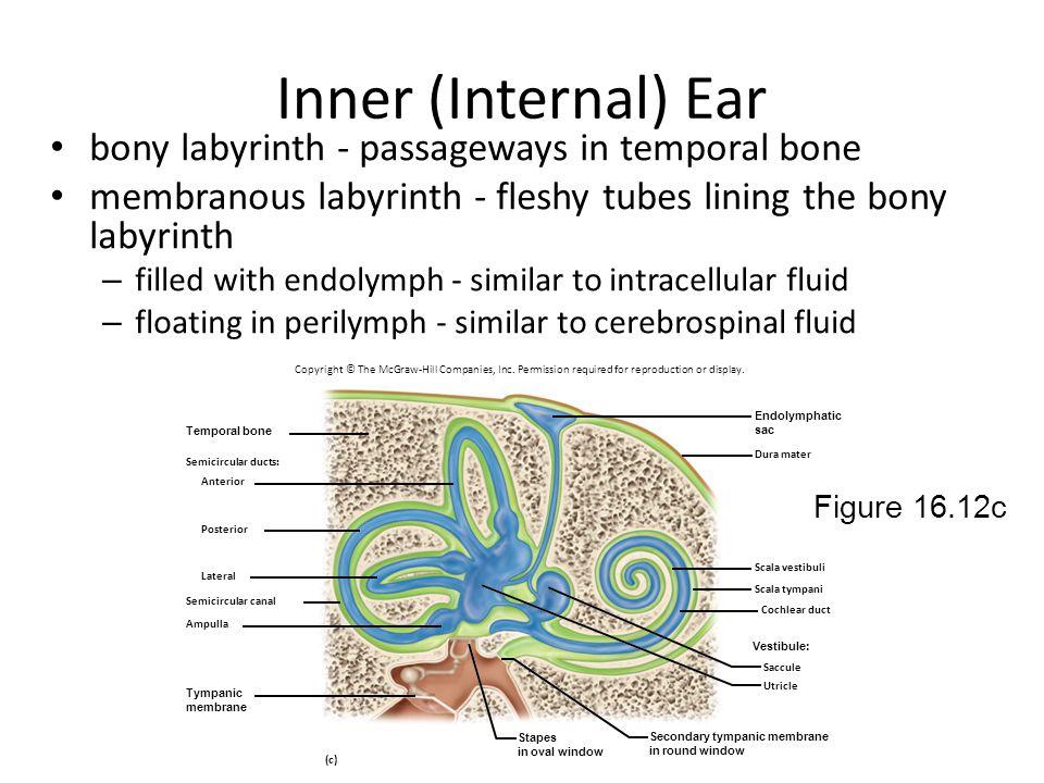 Inner (Internal) Ear bony labyrinth - passageways in temporal bone