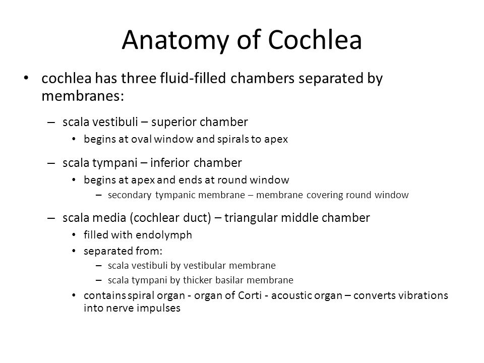 Anatomy of Cochlea cochlea has three fluid-filled chambers separated by membranes: scala vestibuli – superior chamber.