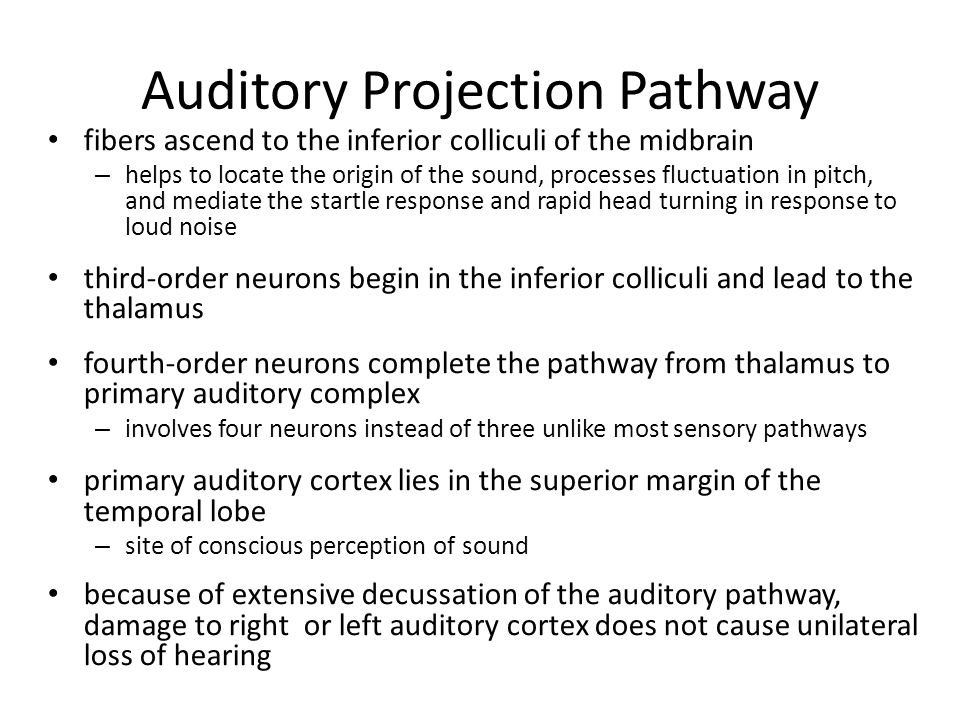 Auditory Projection Pathway