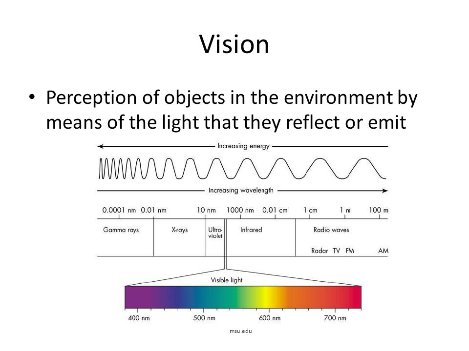 Vision Perception of objects in the environment by means of the light that they reflect or emit.