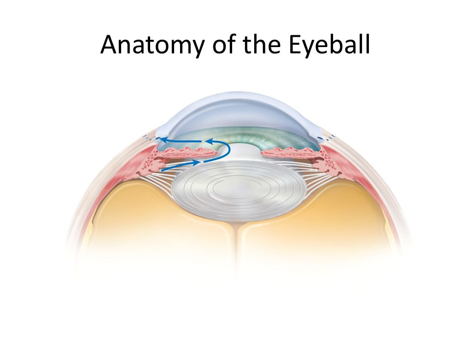 Anatomy of the Eyeball