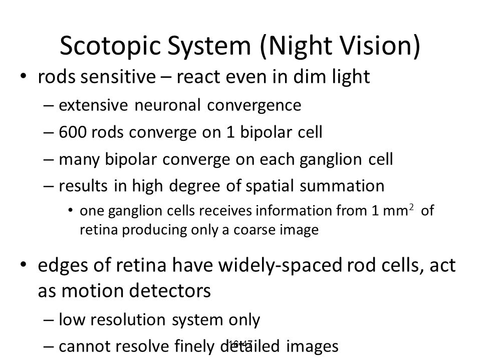 Scotopic System (Night Vision)
