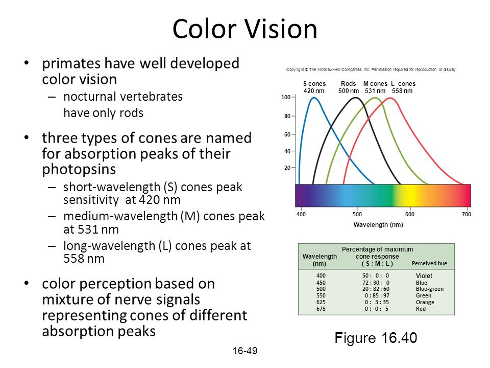 Color Vision primates have well developed color vision