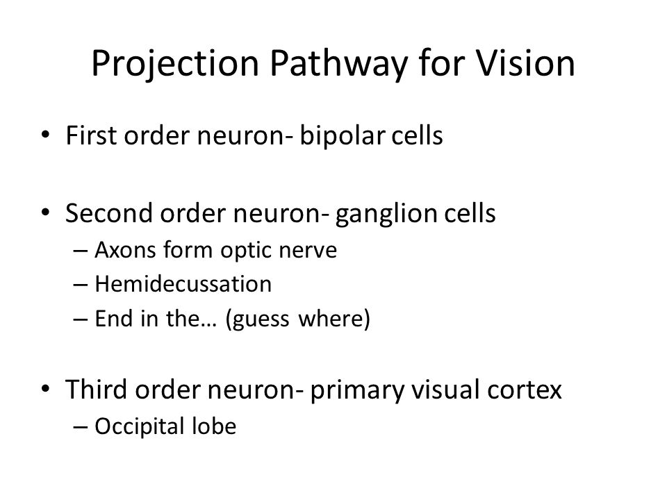 Projection Pathway for Vision