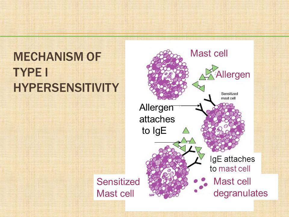 Mechanism of Type I Hypersensitivity