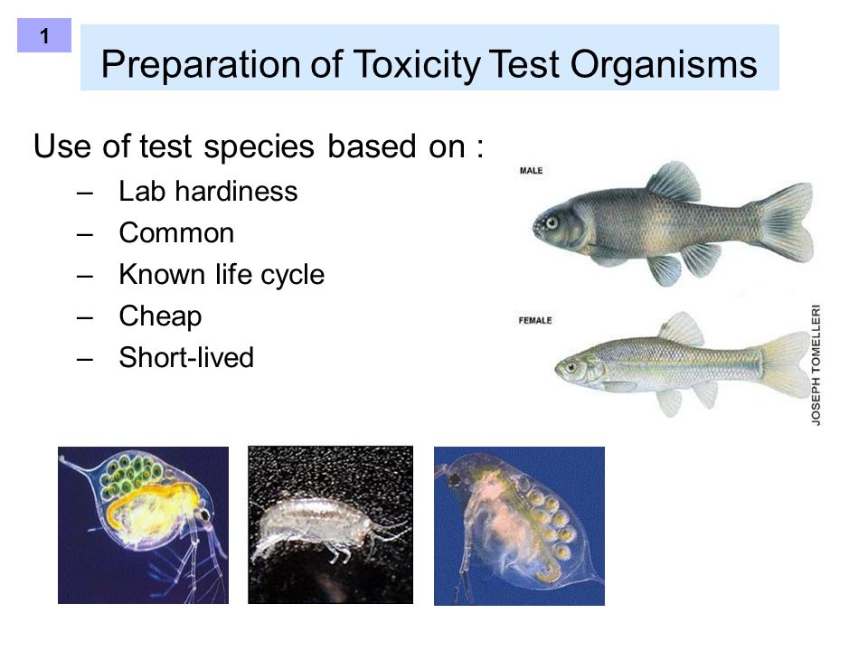Preparation of Toxicity Test Organisms