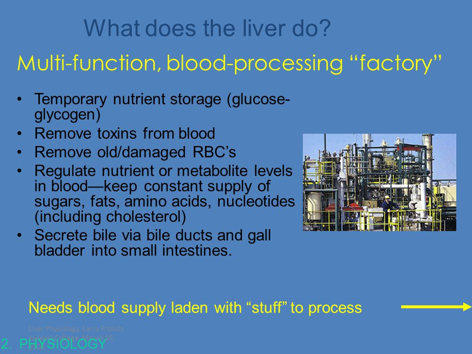 What does the liver do Multi-function, blood-processing factory