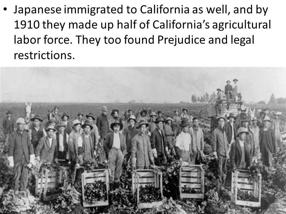 Japanese immigrated to California as well, and by 1910 they made up half of California's agricultural labor force.