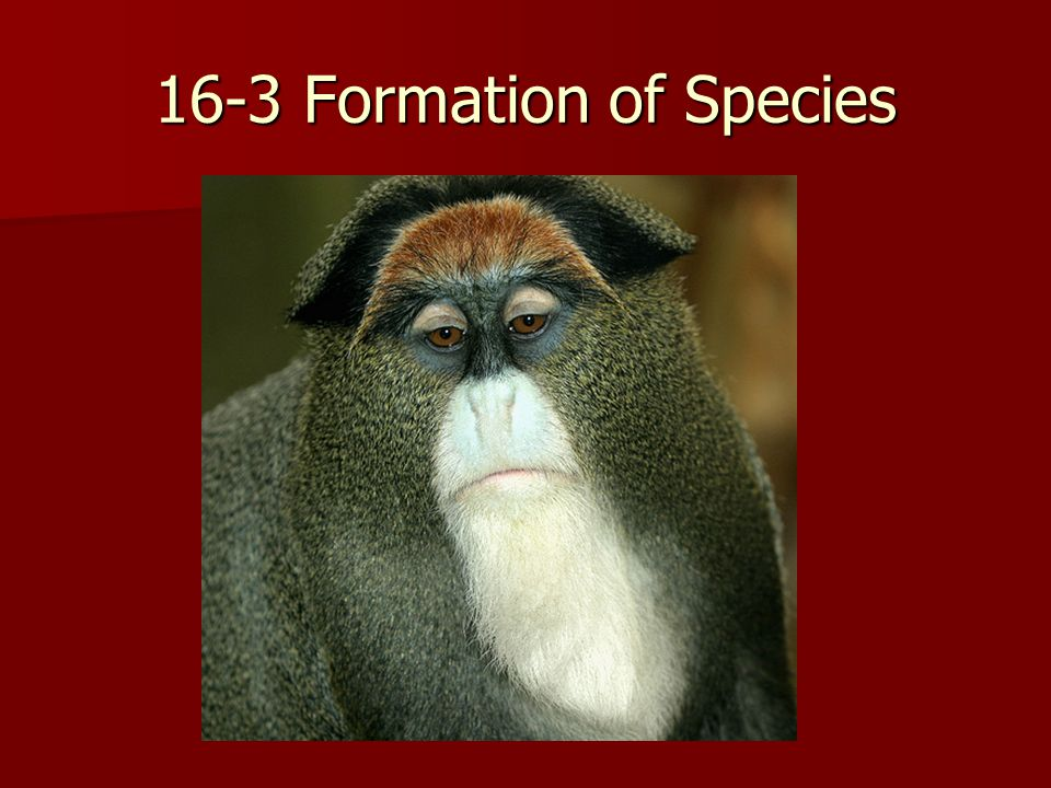 16-3 Formation of Species