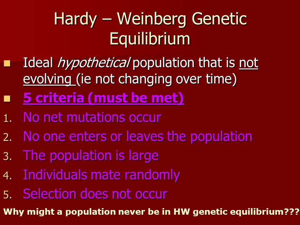Hardy – Weinberg Genetic Equilibrium