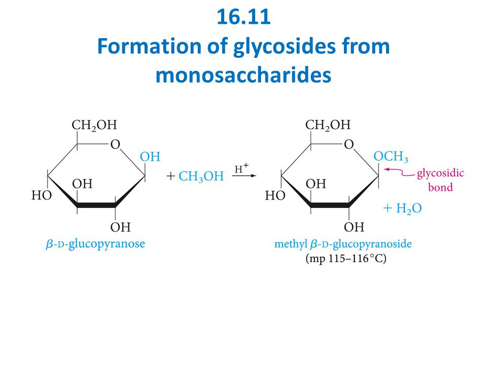 16.11 Formation of glycosides from monosaccharides