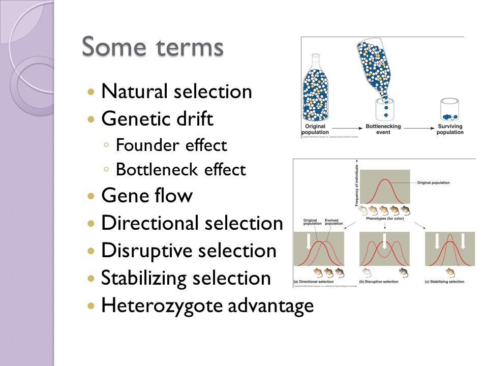 Some terms Natural selection Genetic drift Gene flow