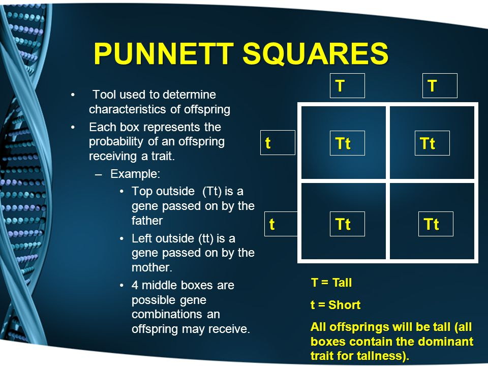 PUNNETT SQUARES T. t. Tt. Tool used to determine characteristics of offspring.