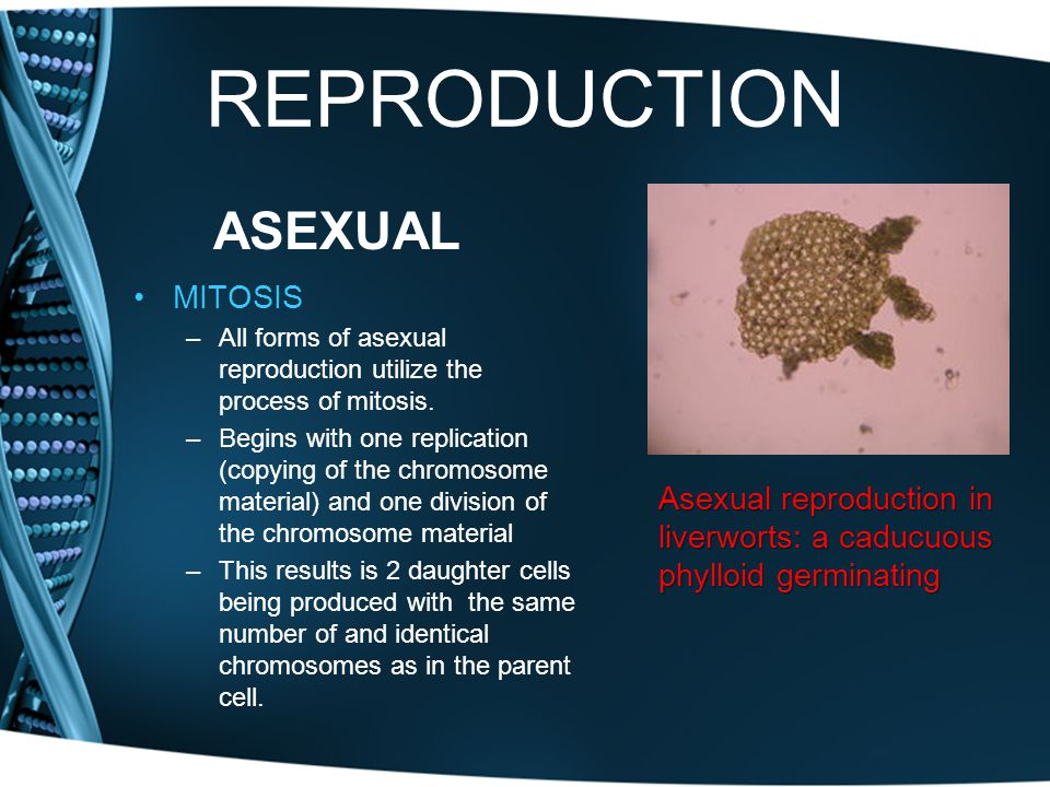 REPRODUCTION ASEXUAL MITOSIS