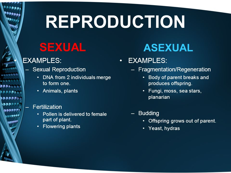 REPRODUCTION SEXUAL ASEXUAL EXAMPLES: EXAMPLES: Sexual Reproduction