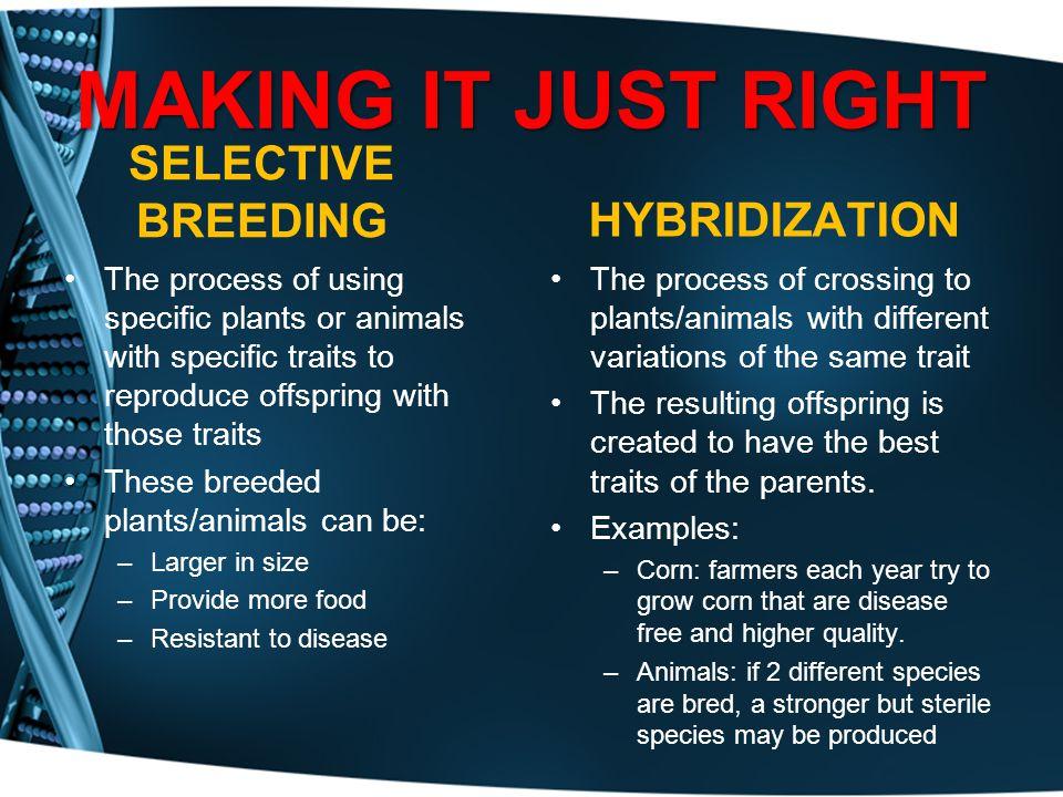 MAKING IT JUST RIGHT SELECTIVE BREEDING HYBRIDIZATION