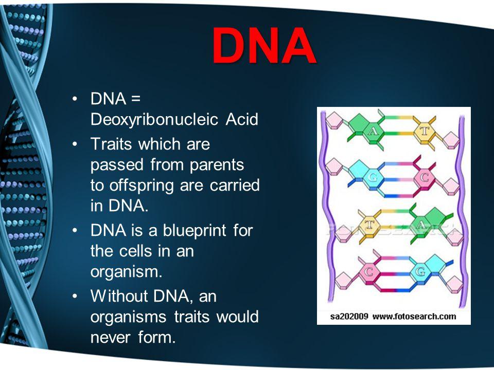 DNA DNA = Deoxyribonucleic Acid